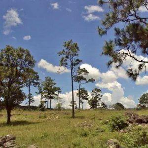 Terreno Valle de Llamapa